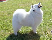 Kallenavn på hund