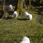 Glade hunder på hytta #2
