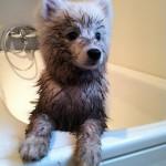 Gjørmebad er deilig!